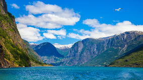 Sognefjord Panorama Stock Photography