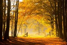 Sogni d'autunno Immagini Stock