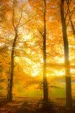 Sogni d'autunno Immagine Stock