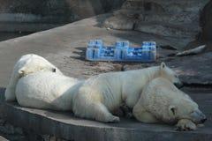 Sogni degli orsi Fotografia Stock