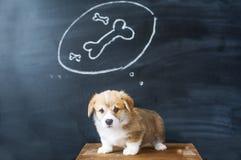 Sogni del cane I sogni del cucciolo di un osso saporito Fotografia Stock Libera da Diritti