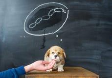 Sogni del cane I sogni del cucciolo di una salsiccia saporita Immagine Stock