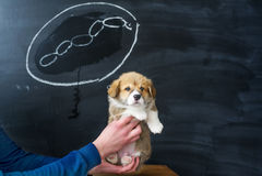 Sogni del cane I sogni del cucciolo di una salsiccia saporita Immagini Stock