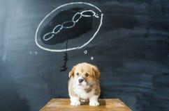 Sogni del cane I sogni del cucciolo di una salsiccia saporita Fotografia Stock