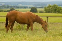 Sogni del cavallo Fotografia Stock
