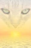Sogni del gatto Fotografia Stock