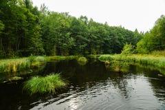 Sogni del lago forest bei Immagini Stock