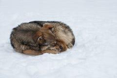 Sogni di inverno di un cane randagio fotografia stock libera da diritti