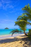 Sogni la spiaggia Immagini Stock Libere da Diritti