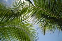 Sogno caraibico Fotografia Stock