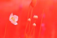 Sogno dei fiori Fotografie Stock