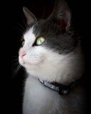 Sogno del gattino Immagini Stock