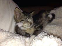 Sogno del gattino Fotografia Stock