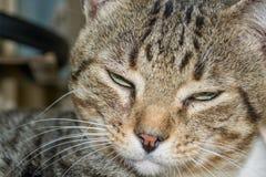 Sogno del gatto Immagini Stock