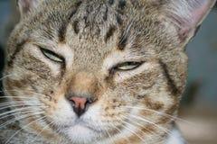 Sogno del gatto Fotografie Stock Libere da Diritti