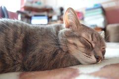 Sogno del ` s del gatto Fotografie Stock Libere da Diritti