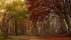 Sogno dell'autunno Immagini Stock