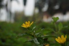 Sogno della flora Fotografia Stock Libera da Diritti