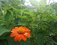 Sogno della flora Fotografia Stock