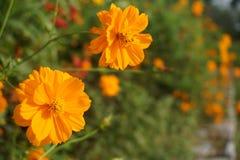 Sogno della flora Bella imperfezione perfetta Fotografia Stock Libera da Diritti