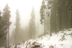 Sogno della nebbia fotografia stock libera da diritti