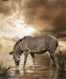 Sogno della zebra Fotografie Stock
