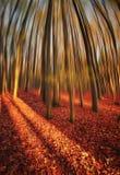 Sogno di autunno Fotografie Stock