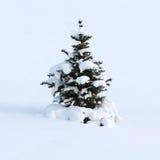 Sogno di inverno di un pelliccia-albero Fotografia Stock Libera da Diritti