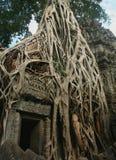 Soi-disant porte de Tomb Raider au temple de Prohm de ventres dans la région d'Angkor, Cambodge Photographie stock
