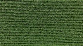 Soi plantacji śródpolny widok z lotu ptaka zdjęcie wideo