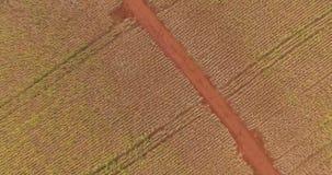 Soi plantacji ?r?dpolny widok z lotu ptaka zbiory