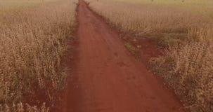 Soi plantacji ?r?dpolny widok z lotu ptaka zdjęcie wideo