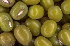 Soia verde (glycine max) Fotografie Stock Libere da Diritti