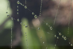 Soie en cristal d'araignée Photo stock