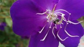 Soif de nectar Photo libre de droits
