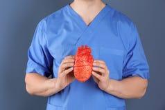 Soignez tenir le modèle du coeur sur le fond de couleur Photos libres de droits