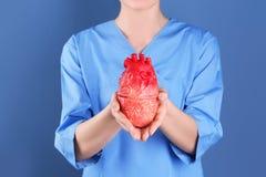 Soignez tenir le modèle du coeur sur le fond de couleur Photo libre de droits