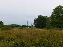 soikinsky半岛的本质 库存照片