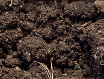 Soil Royalty Free Stock Image