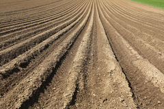 Soil. Plowed soil of an agricultural field Royalty Free Stock Image