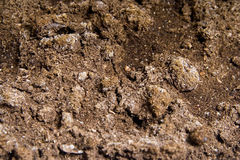 Soil. In the pot Stock Photography