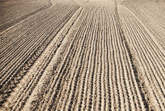 Soil of an agricultural field Stock Image