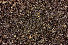 Soil background Stock Image