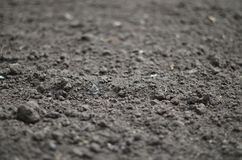 Soil background Royalty Free Stock Photo