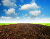 Soil Background blue sky. Green grass Royalty Free Stock Photo
