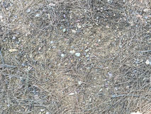 Soil background. With small stone and pine needle Royalty Free Stock Images