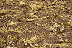 Soil in Barn Royalty Free Stock Photo