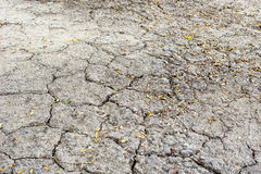 A soil beautiful pattern. Royalty Free Stock Images