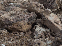 Soil Royalty Free Stock Photo