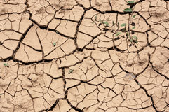 Soil - Cracked dry land without water- Textures Stock Photos